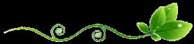 bio-divider
